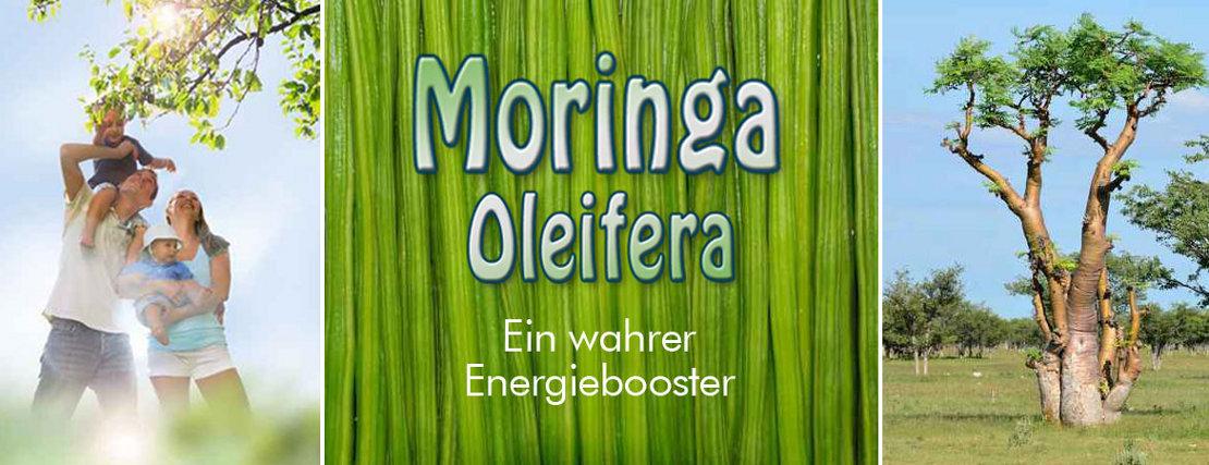 Moringa Oleifera Blattpulver oder Tabletten hier bestellen